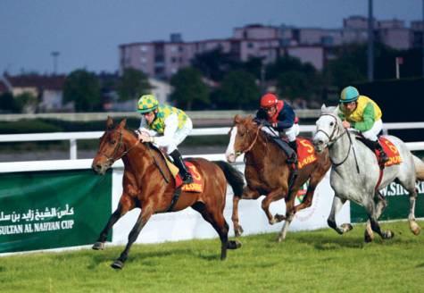 Ogólnoświatowy Festiwal Wyścigów Koni Arabskich im. Szejka Zayed Bin Sultan Al Nahyan