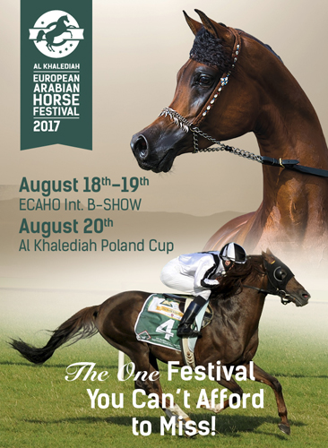 Al Khalediah European Arabian Horse Festival 2017 już w najbliższy piątek