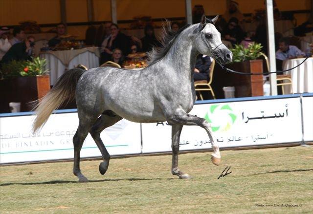 Kabsztad wygrywa klasę na Festiwalu Al Khalediah