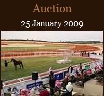 Al Khalediah Horse Festival: aukcja i wyścigi
