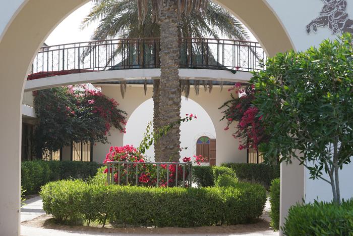 Al Naif Stud, Qatar, by Monika Luft