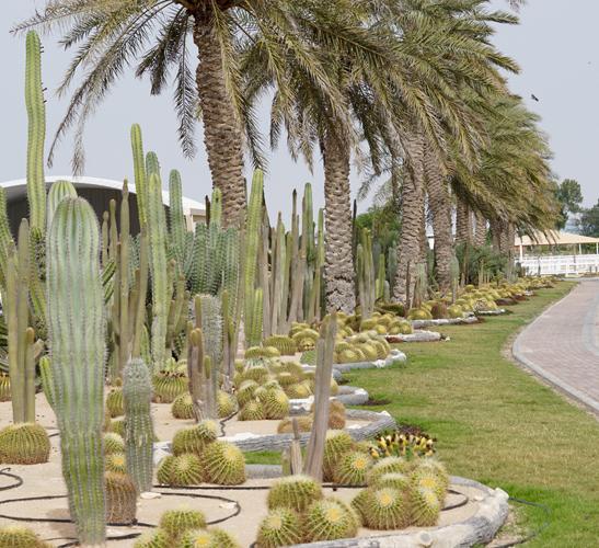 Stadnina Al Waab, fot. Monika Luft
