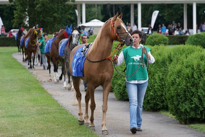 Popisowe Derby odjazdowego kasztana Alladyna (26.07.2015)