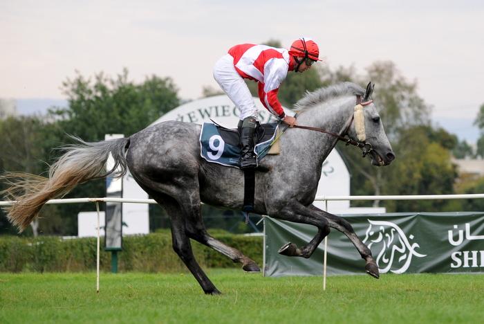 28. Nagroda Europy na Służewcu. Puchar Szejka trzeci raz z rzędu wygrał koń z zagranicy (26.08.2012)