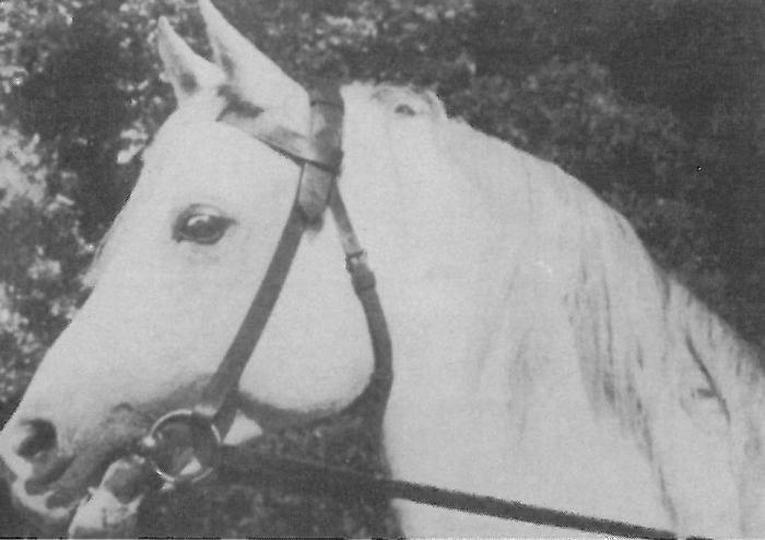 Amurath Sahib, archive photo
