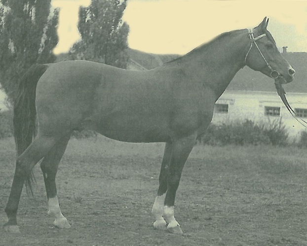 Arax, archive photo