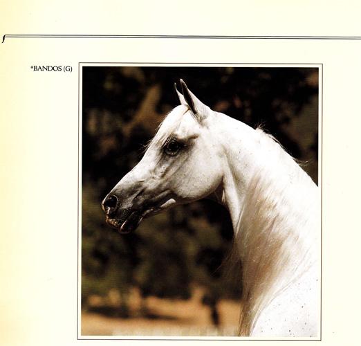 Bandos w katalogu aukcji Polish Ovation (USA, 1985)