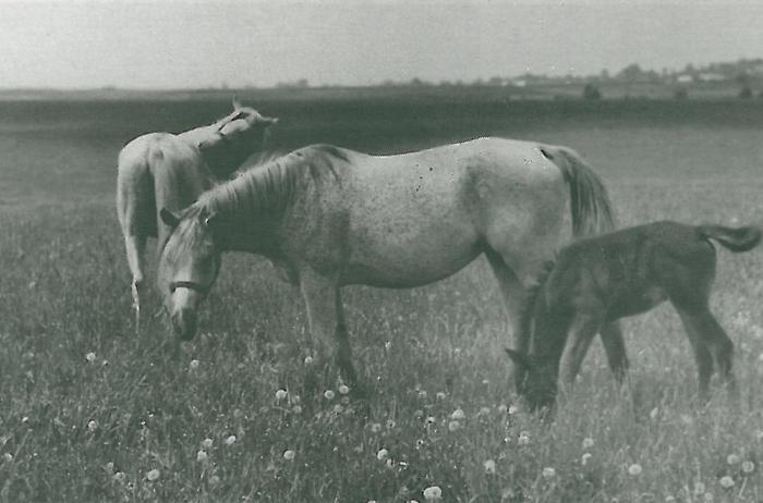 Bona (zdjęcie z archiwum Romana Pankiewicza)