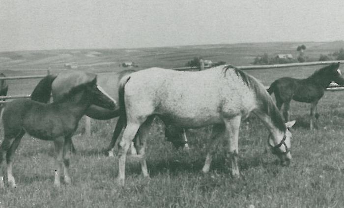 Bryła. Archive photo