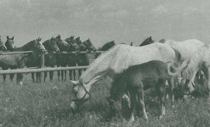 Bulwa (zdjęcie z archiwum Romana Pankiewicza)