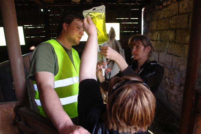 Pogotowie dla Zwierząt o akcji ratunkowej w Cholewach. Zobacz zdjęcia!