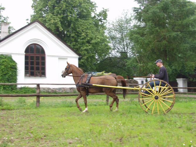 Czadra w zaprzęgu, powozi Bartosz Niezgoda, Maćkowa Ruda 2004, fot. Arkadiusz Szaraniec