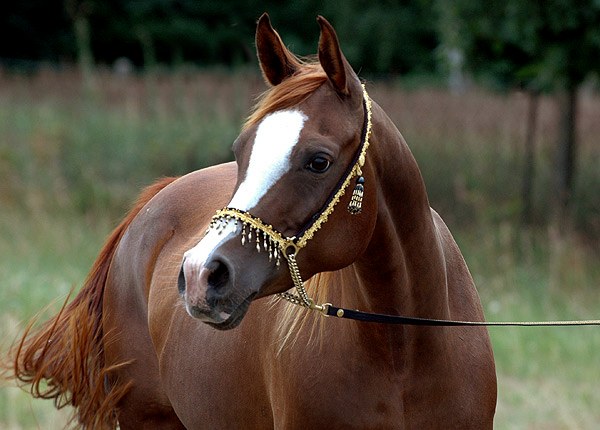 Amerykańskie zakupy Zalii Arabians