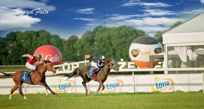 Derby arabskie - nasza relacja w dziale Wyścigi/Sport