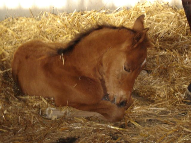Filly by Equifor. Photo posted by Marsha Parkinson at Blackhorse Community forum