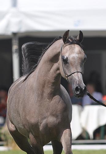 Egema z brązowym medalem w Abu Dhabi