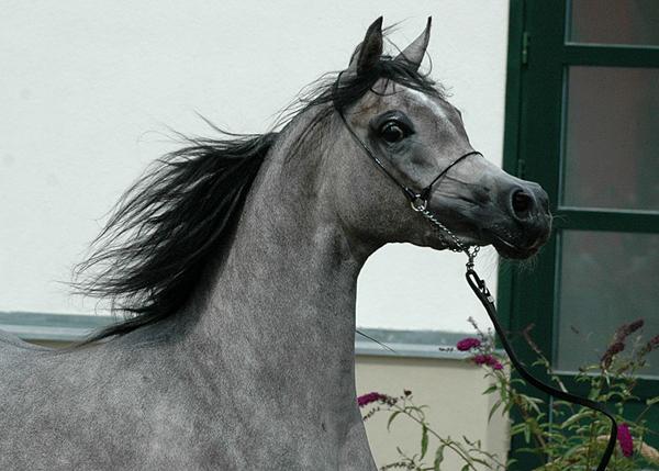 Eksterna, fot. Katarzyna Dolińska