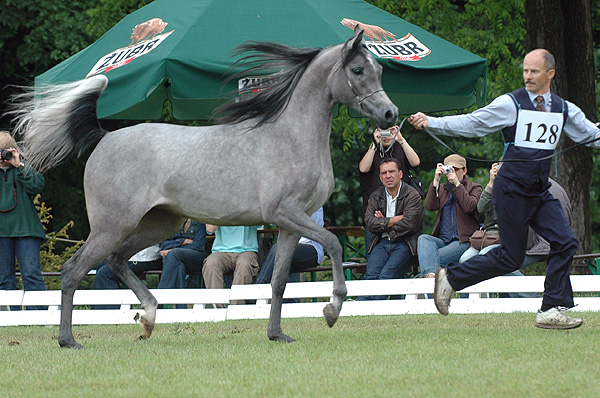Eksterna – best private-bred 2yo filly, by Katarzyna Dolińska