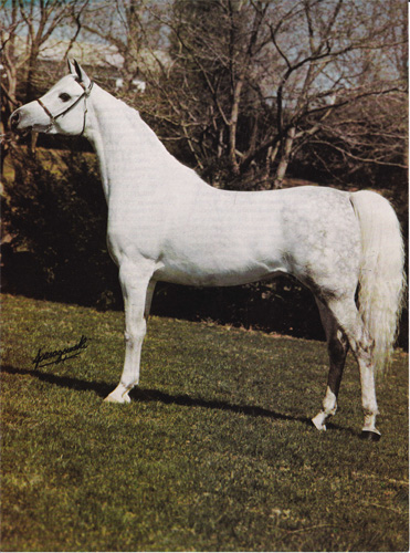 Elkana, Nichols Sale price record holder (USD 185000). Photo from the Nichols Sale 1976 catalogue