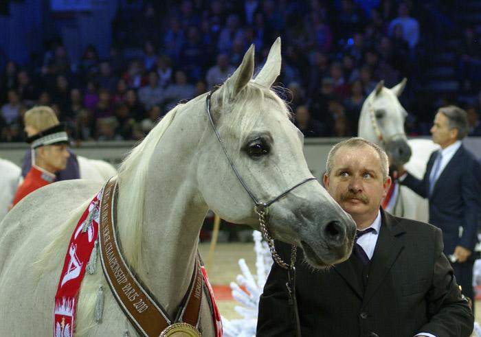 Polskie konie w Paryżu. Obszerna relacja już w dziale Pokazy! Zobacz kronikę towarzyską