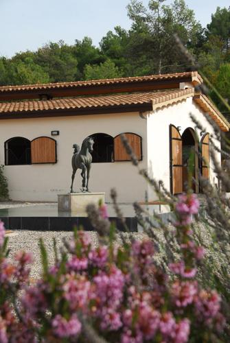 Equus Arabians, fot. z archiwum prywatnego