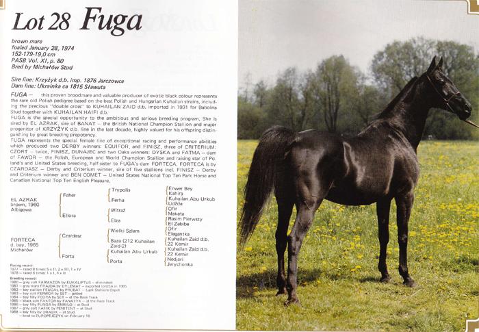 Kartka z katalogu aukcji 1988: klacz Fuga