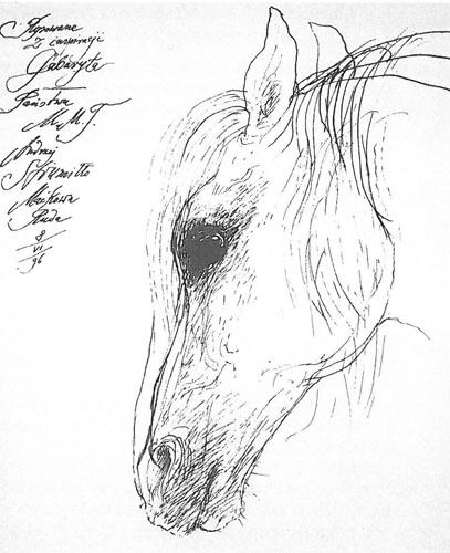 Gabaryt, a drawing by Andrzej Strumiłło