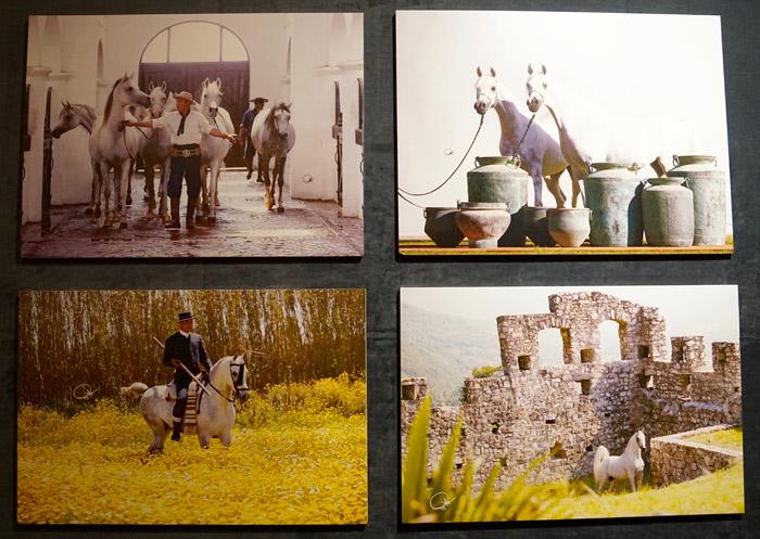 Zdjęcia Gigi Grasso, eskponowane na wystawie w Dammamie, fot. Monika Luft