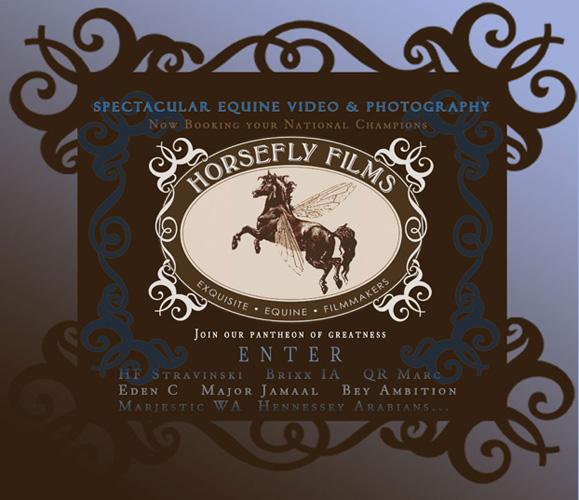 Zostań sponsorem dokumentu o polskich koniach arabskich