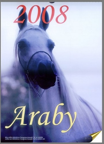 Araby 2008