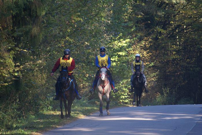 Klasa L, konie 4-letnie: Ali Gazal LA, Panicz, Silvano. Fot. Krzysztof Dużyński
