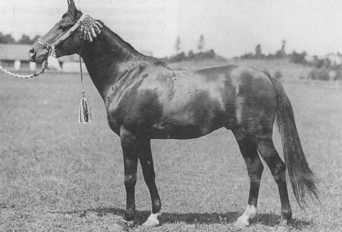 Kuhailan Haifi db, Gumniska 1931. Archive photo