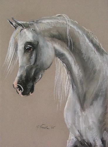 Laheeb, rys. Sylwia Iłenda