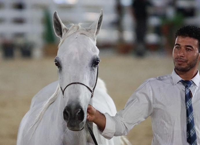 The mare Manar Umm Aludham, by Monika Luft