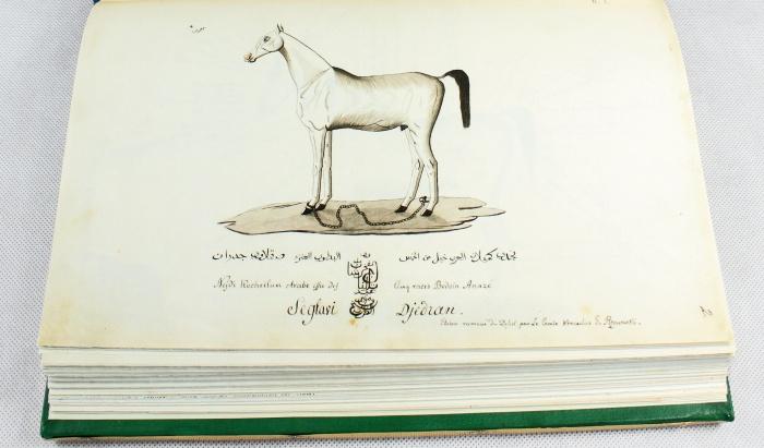Jeden z rysunków Wacława Emira Rzewuskiego, fot. Manuscriptum