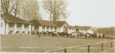 Klacze ze źrebiętami na padoku, 1943, fot.archiwum