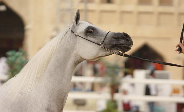 Nashua Al Rayyan, fot. Monika Luft