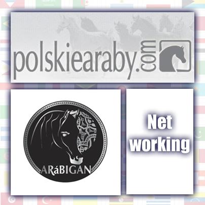 Polskiearaby.com współpracują z Arábigan