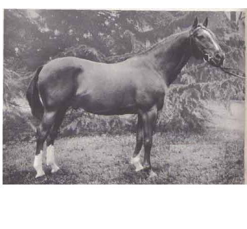 Og. Saint Laurent 1948, fot. z arch. autora