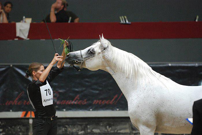 SC Dyonn, Res. Senior Champion Stallion, by Mateusz Jaworski