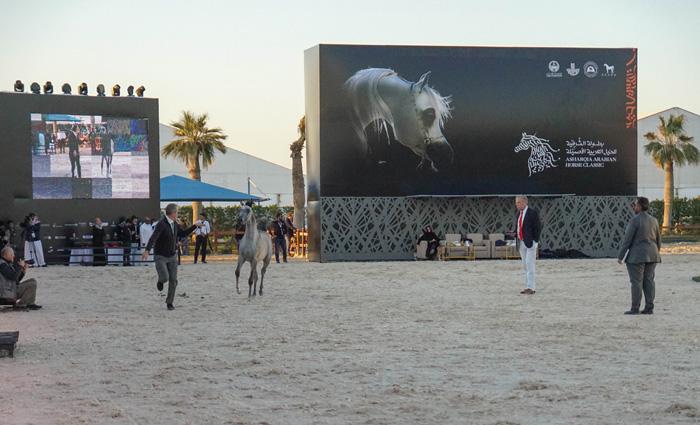 Asharqia Arabian Horse Festival 2019, by Monika Luft