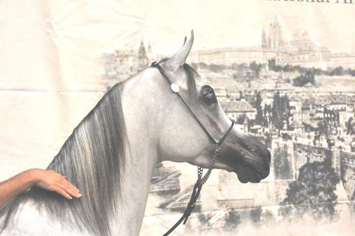 Prague Intercup pod okiem sokoła (3-4 września)