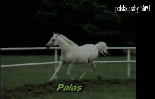 Unikatowe archiwalne materiały filmowe z 1985 roku: Hodowla