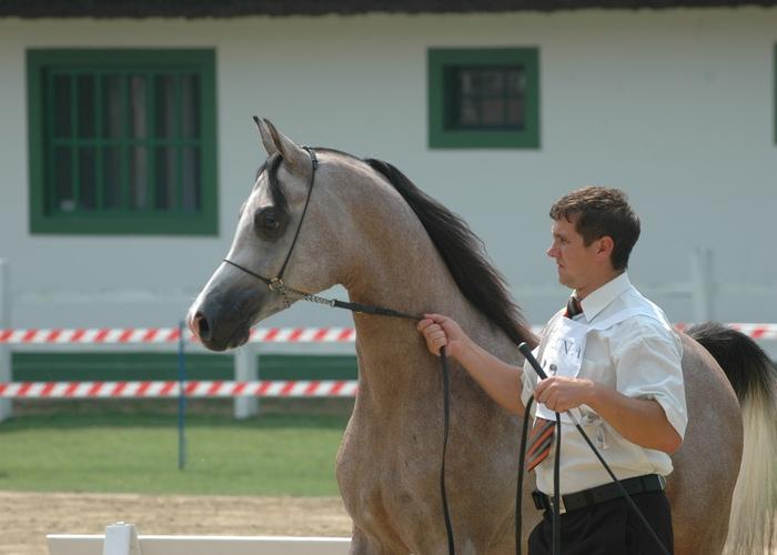 Polskie konie wygrywają klasy nad Balatonem