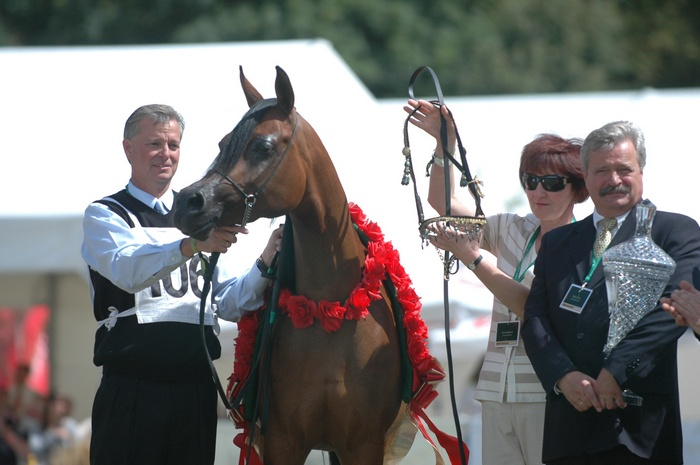 Ponad 3 mln euro za polskie konie. Pianissima BiS