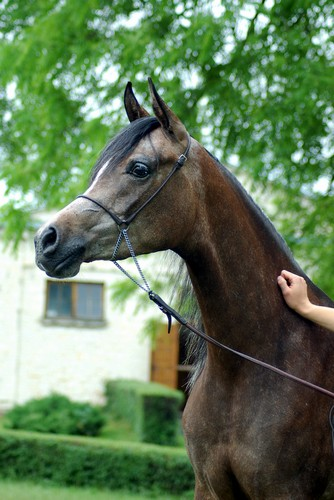 Pistoria – 2nd pl. 2yo fillies B, by Zuzanna Zajbt