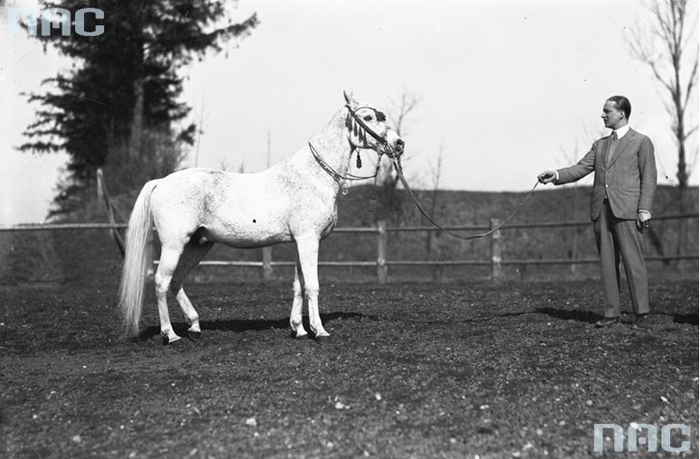 Prince Roman Sanguszko with the stallion Achmet, 1931. Photo: National Digital Archives (NAC)