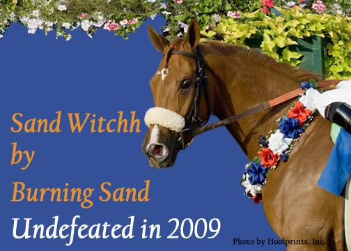 Sand Witchh, fot. Hoofprints, Inc.