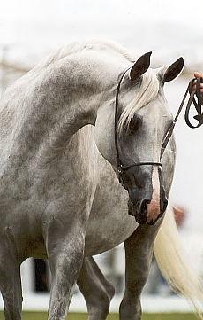 Magia konia w Łazienkach