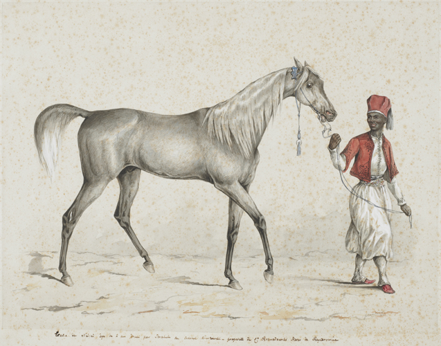 Juliusz Kossak: Grey stallion (1844). Photo from the Regional Museum of Tarnów (Muzeum Okręgowe w Tarnowie) collection, Poland